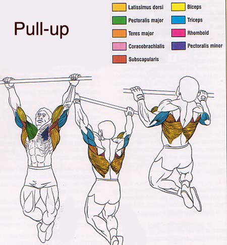 How I developed a better physique than most Army Rangers by doing pull-ups