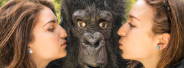 Gorilla Mindset PDF